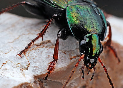 closeup photo of green beetle at daytime