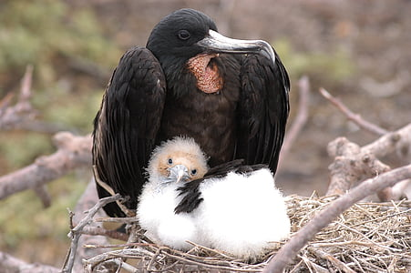 black bird on nest