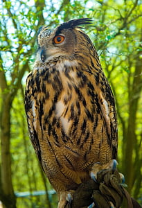 close-up photography brown owl