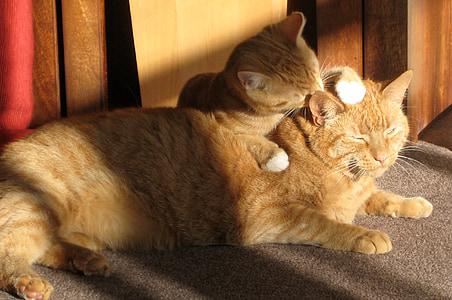 orange tabby with kitten on the floor