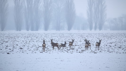 deers on snow during daytime