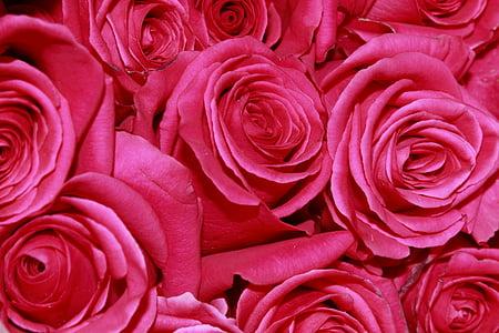 closeup photograph of roses