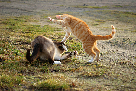orange tabby cat and gray and white cat playing on green grass taken during daytime