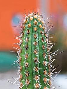 close up photograph of cactus