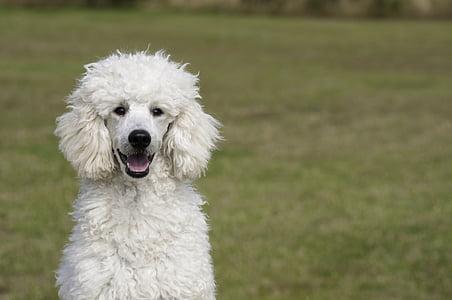 photographed of long-coated white dog