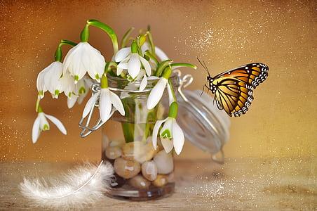 monarch butterfly near white petaled flower