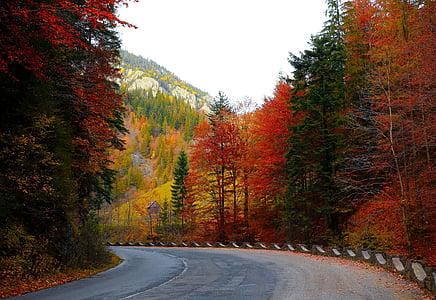 concrete road surround by pine tree