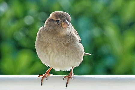 closeup photo of gray bird perched