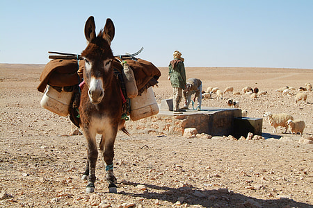brown and white donkey during daytime