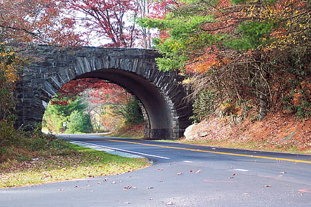 tunnel bridge surrounded by trees during daytime
