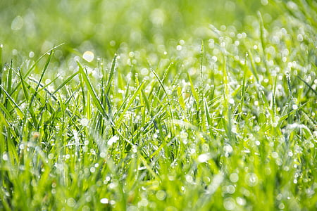 photo of green grass with water dews