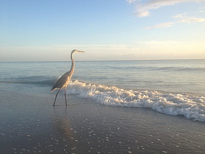 brown heron walking on seashore during daytime
