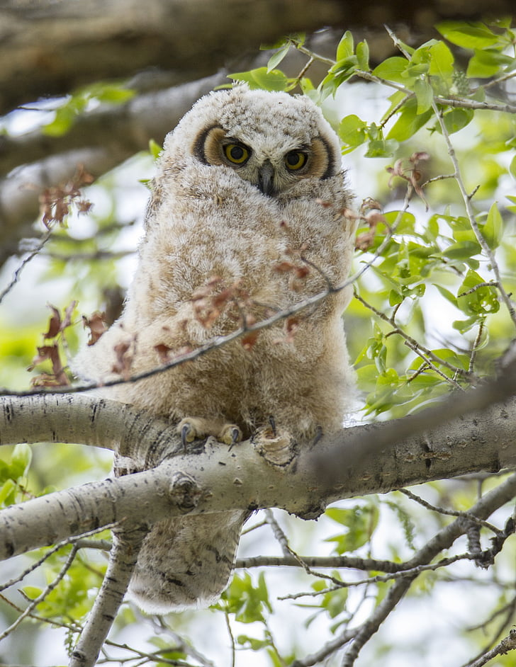 brown and gray owl on gray tree branch