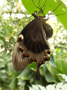 butterfly hanging on leaf