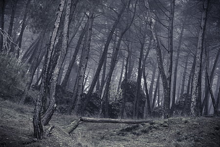 forest in grayscale photography