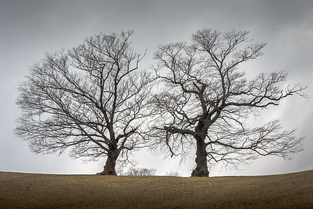 two trees on ground under clouds