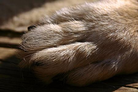dog paw, paw, fur, foot, dog, pet