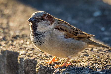 macro photo of gray and brown sparrow bird