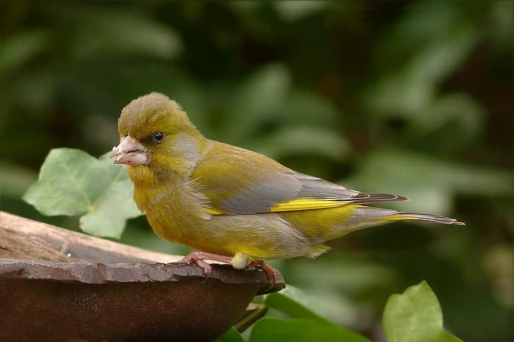 yellow bird on wood near trees