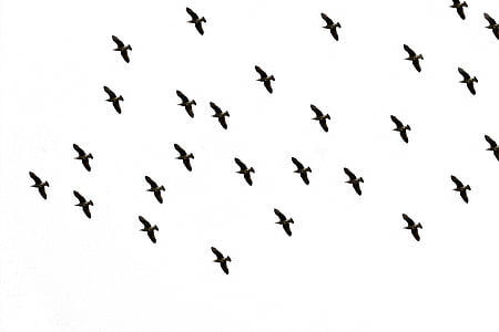 flock of bird flying midair