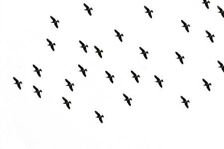 flock of bird flying midair