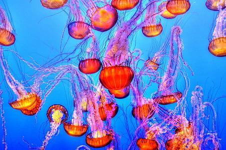 photo of orange-and-purple jellyfishes underwater