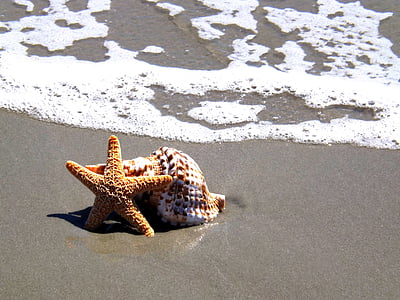 starfish and seashell near the shore