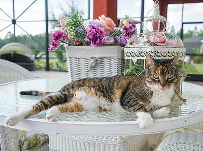 adult brown tabby cat beside basket of flowers