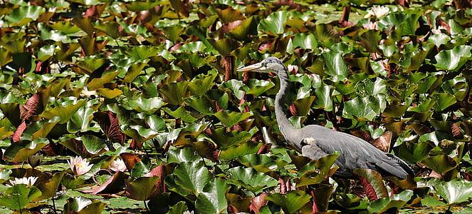 gray crane on leaf