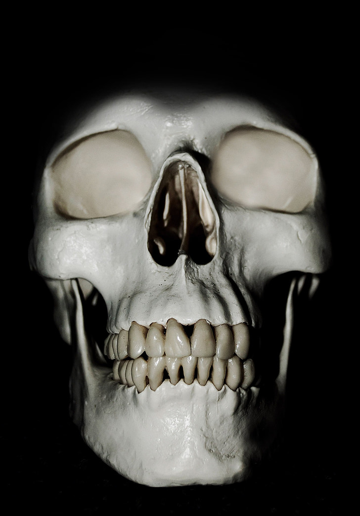 Royalty Free Photo White Human Skull Model Pickpik