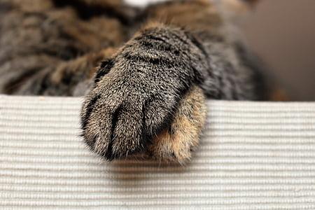 animal's paw