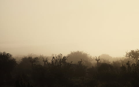 silhouette of deer with mist