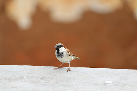 shallow focus photography of white and brown bird