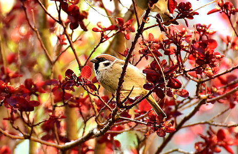 beige sparrow on tree branch
