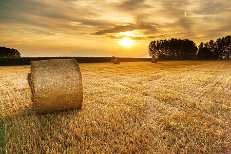 roll of hay on grass field during golden hour