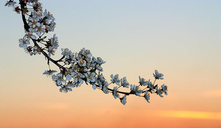 white flowers under sunset