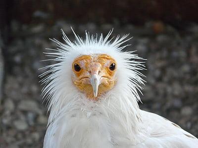 white chicken standing near gray wall during daytime