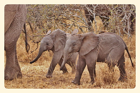 two elephants during daytime