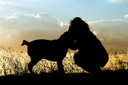 silhouette person and animal photography