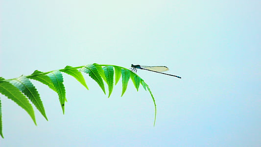 black damselfly perching on green leaves at daytime