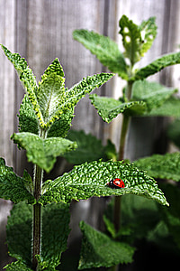 selective focus photography of red ladybug on leaf