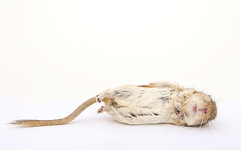 brown animal lying on floor