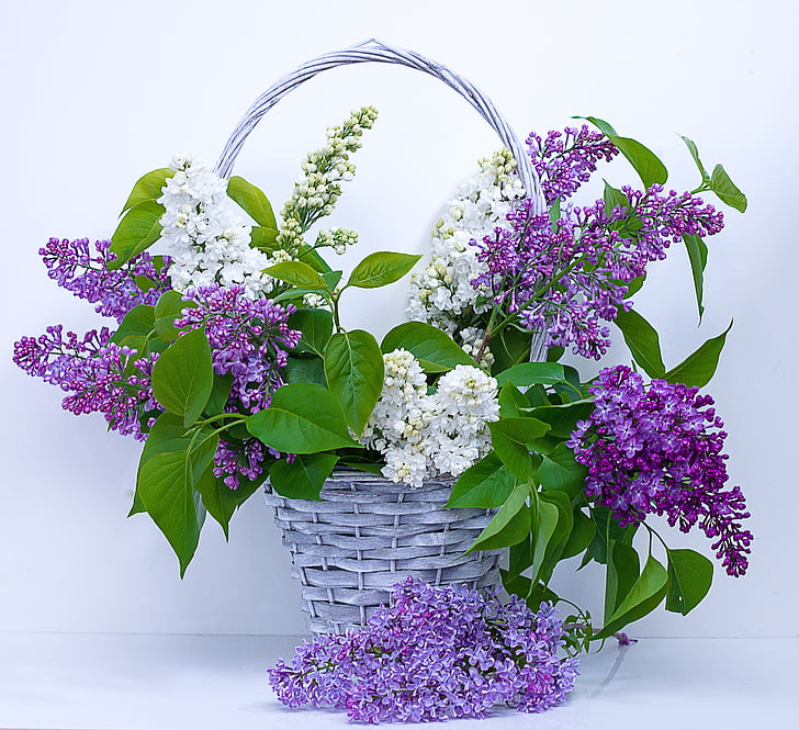 Royalty free photo purple and white petaled flower arrangement with purple and white petaled flower arrangement with white wicker basket mightylinksfo