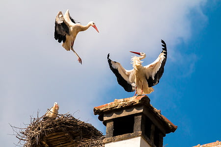 two storks on the roof under blue sky