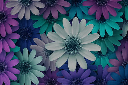 assorted-color daisies wallpaper