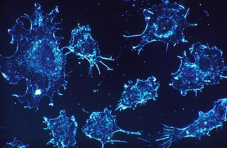 amoeba microscopic image