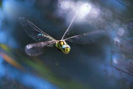 macro photography of green dragonfly