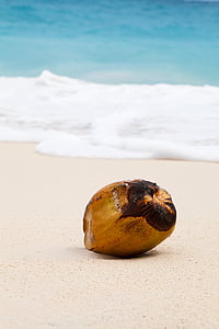 shallow focus photography of coconut at coast