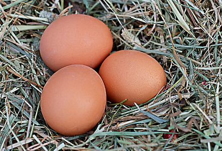 three poultry eggs on nest