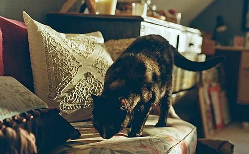 black cat smell white seat